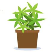 Planta de interior con maceta
